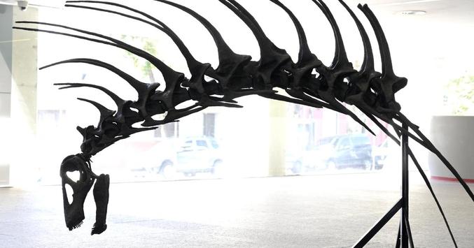Une nouvelle espèce de dinosaure herbivore, dotée d'épines défensives le long de la colonne vertébrale, a été découverte en Patagonie, dans le sud de l'Argentine. Baptisé Bajadasaurus pronuspinax, il vivait il y a 140 millions d'années dans une région d'Argentine où les découvertes de dinosaures sont fréquentes. Les épines, extrêmement longues, fines et pointues, dans le dos et le cou dissuadaient de possibles prédateurs et étaient probablement recouvertes de peau ou de corne.