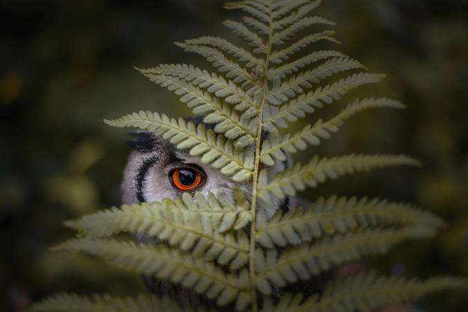 Vous n'êtes jamais seul, dans la forêt.