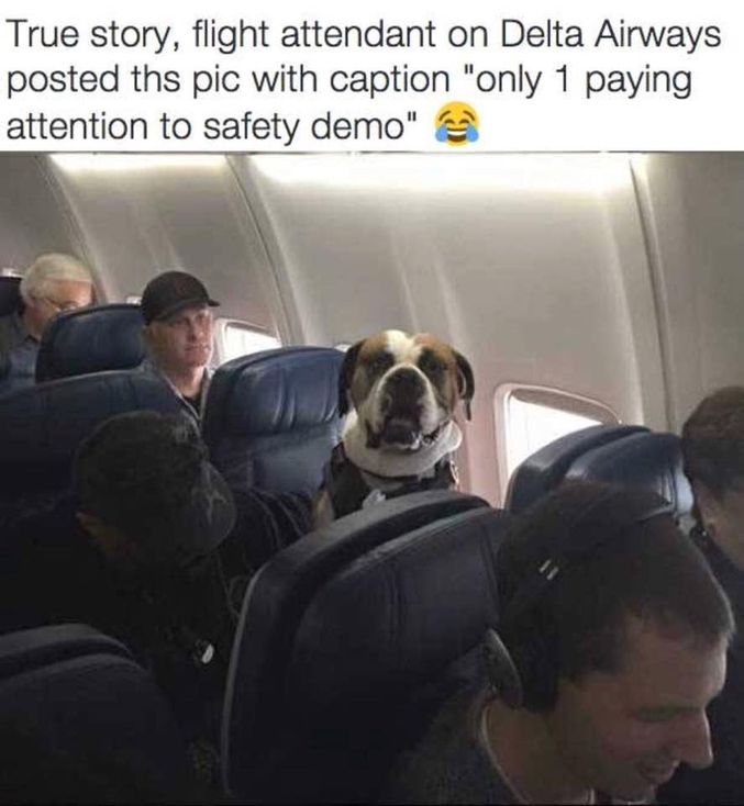 """""""Une hôtesse de Delta Airways a posté cette photo avec pour sous-titre: """"Il n'y en a qu'un qui prête attention aux démonstrations de sécurité !""""""""."""