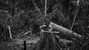 Amazonie endeuillée