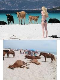 Se baigner sur les plages corses avec les autochtones