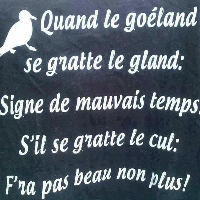 Car en breton, la mouette se dit ''Gouelan''