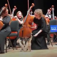 Chaf d'orchestre