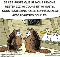 L'origine des ornithorynques