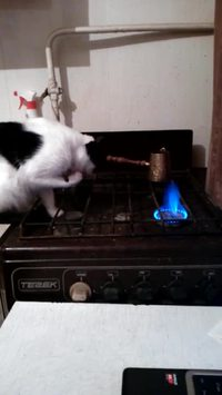 Chat vs flamme