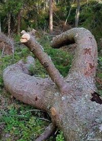 Un bonne grosse branche