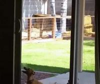 Un chien coulissant