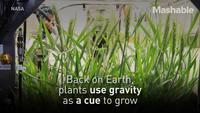 Du blé dans l'espace
