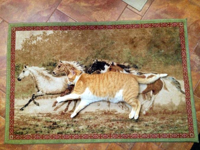 Un chat qui galope avec des chevaux.