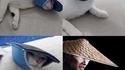 Un chat, une tong