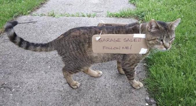 Alf aurait aimé le concept du chat-sandwich.