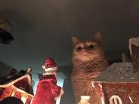 Le père Noël ne le sait pas encore...