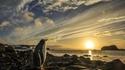 Un manchot face au soleil de l'Antarctique