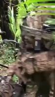 La jungle est sauvage