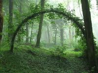 Une arche (mystique?) en pleine forêt