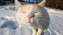 Les chats, au poteau !!!
