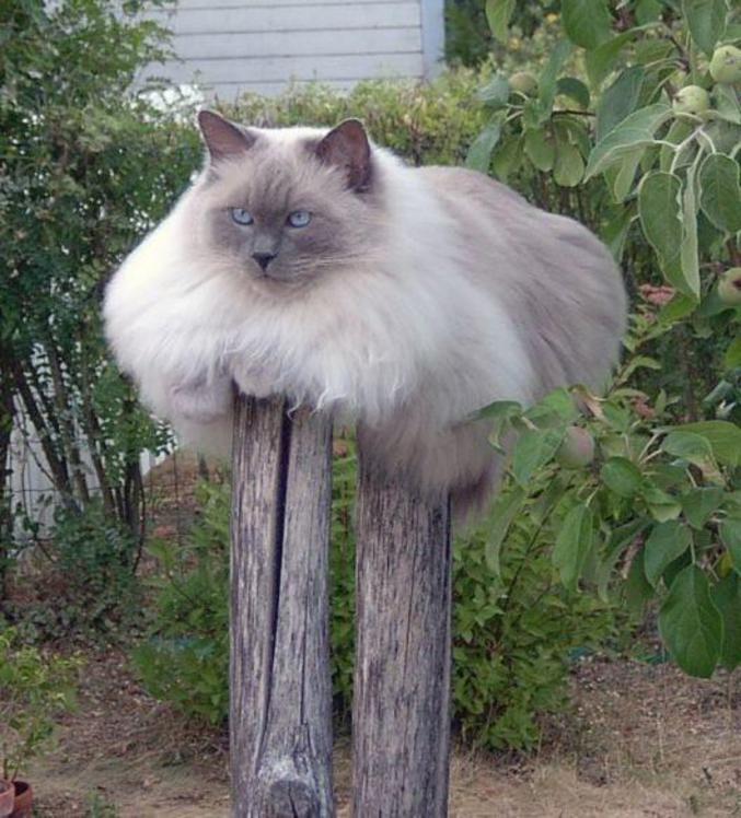 Un chat qui semble avoir des prothèses