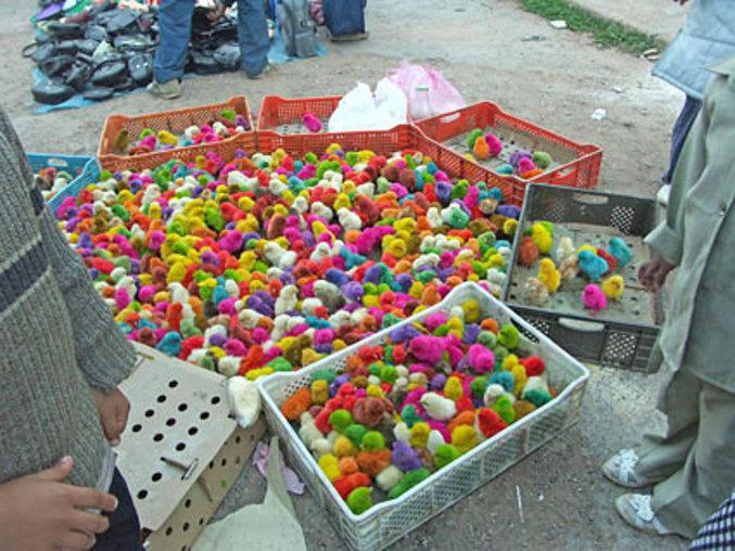 Des poussins multicolores en vente à la sauvette.