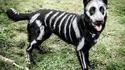 Déguisement pour chien pour Halloween