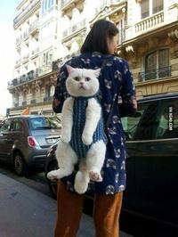 Promener son chat...