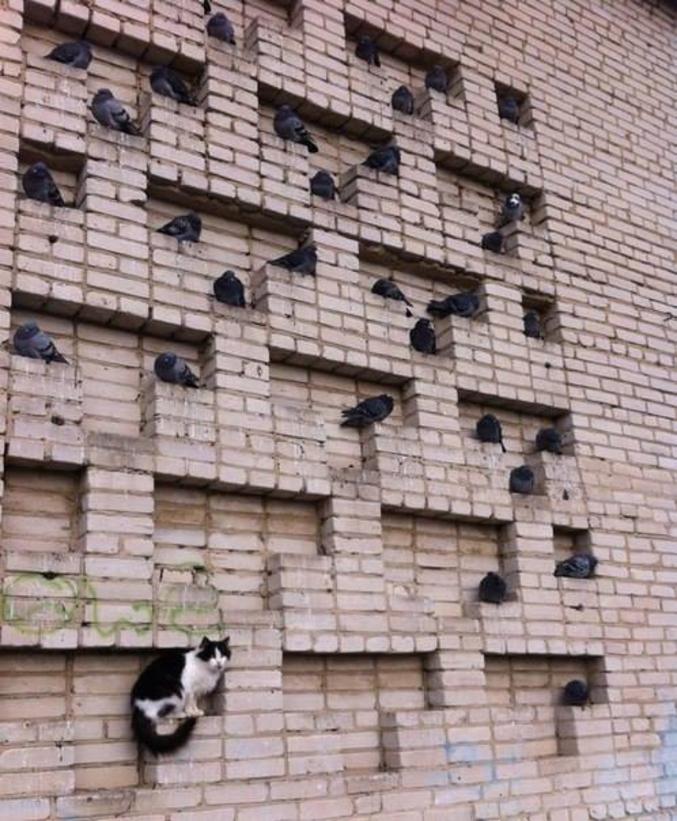 ou troll de pigeons