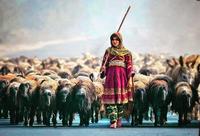 Bergère dans le disctrict Multan, Pakistan