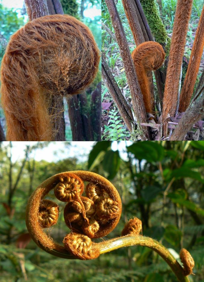 pour ceux qui préfèrent les plantes aux cochons d'inde! ;) http://lelombrik.net/74261