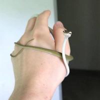 nominée pour miss serpent 2018