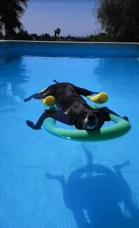 Kan le chien apprend à nager