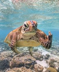 Une tortue qui fait passer un message aux humains