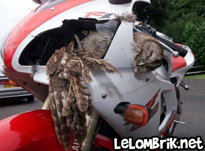 mosquito helicopter crash with 5841 on Mosquitoxe further Drones Taking Flight as well What Happens When A Helicopter Loses An Engine also Istanbul Helicopter Crash Tv Tower Buyukcekmece District Russians Fog Killing People Turkey Pilot A7622036 besides Russian K7 Heavy Bomber.
