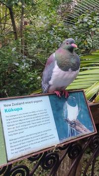 Encore un pigeon qui tombe dans le panneau...