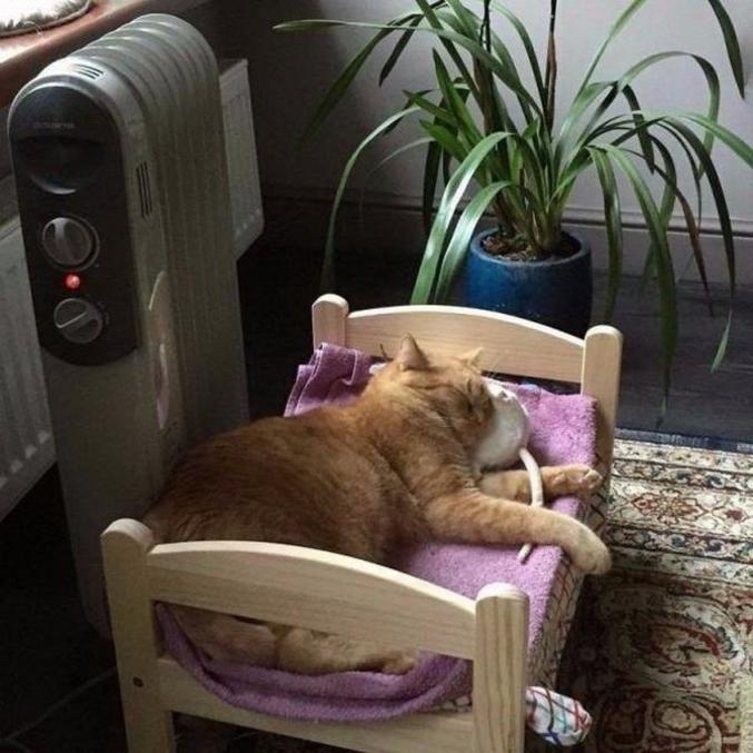 Celle du chat.