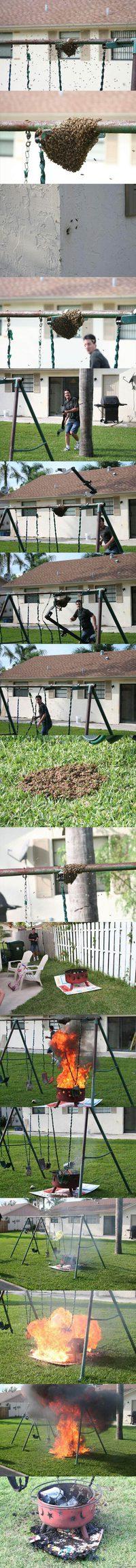 Problème d'abeilles ?