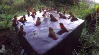 Des oiseaux douches