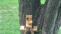 Pique-nique pour écureuils