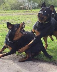 Que pourraient bien dire n°22 : ces deux chiens ?