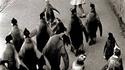 Monsieur popper et les pingouins 2