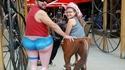 culotte de cheval