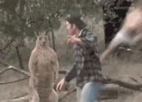 Les kangourous ça vous fait peur ?