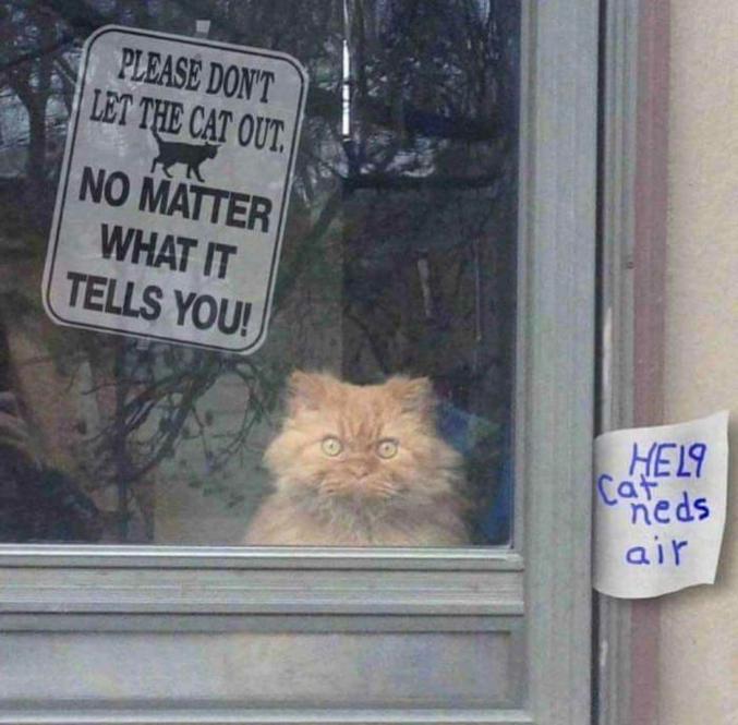 Ne laissez pas le chat sortir, quoi qu'il dise ! (Sur le petit papier : Au secours, le chat a besoin d'air)