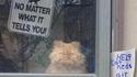 Ne laissez pas le chat sortir, quoi qu'il dise