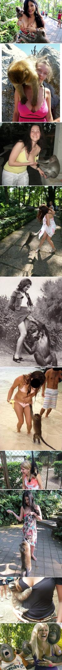 Les singes, ces obsédés
