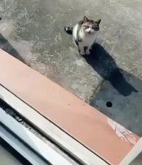 Sois pas chien, file-moi un morceau !