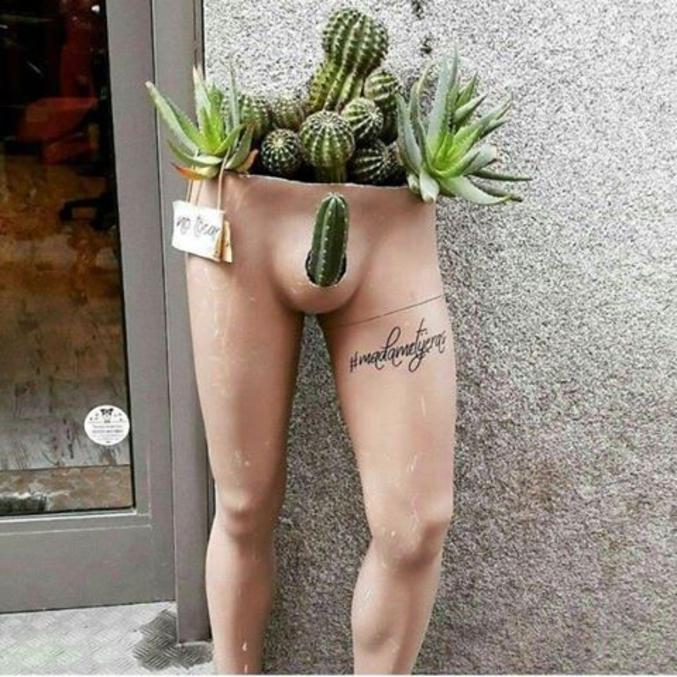 ''Tu veux voir mon cactus''