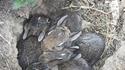 De jeunes lapins
