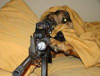 Chien sniper