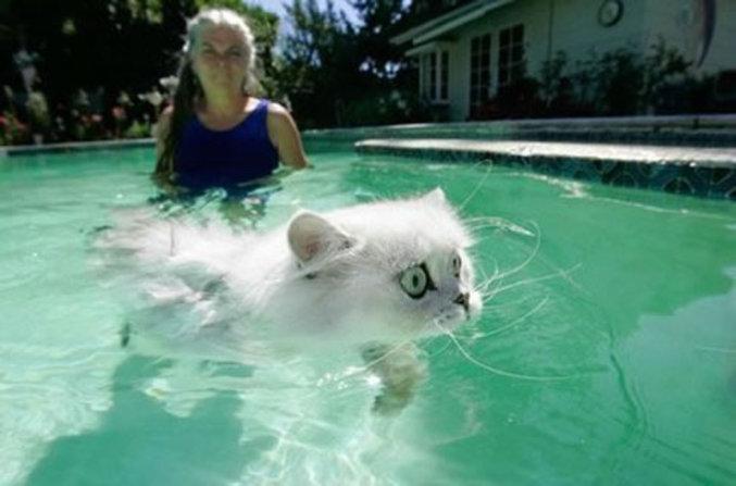 Un petit chat qui aime nager