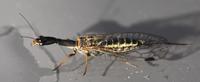 Un entomologiste chez les lombriks?