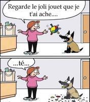 Un chien joueur